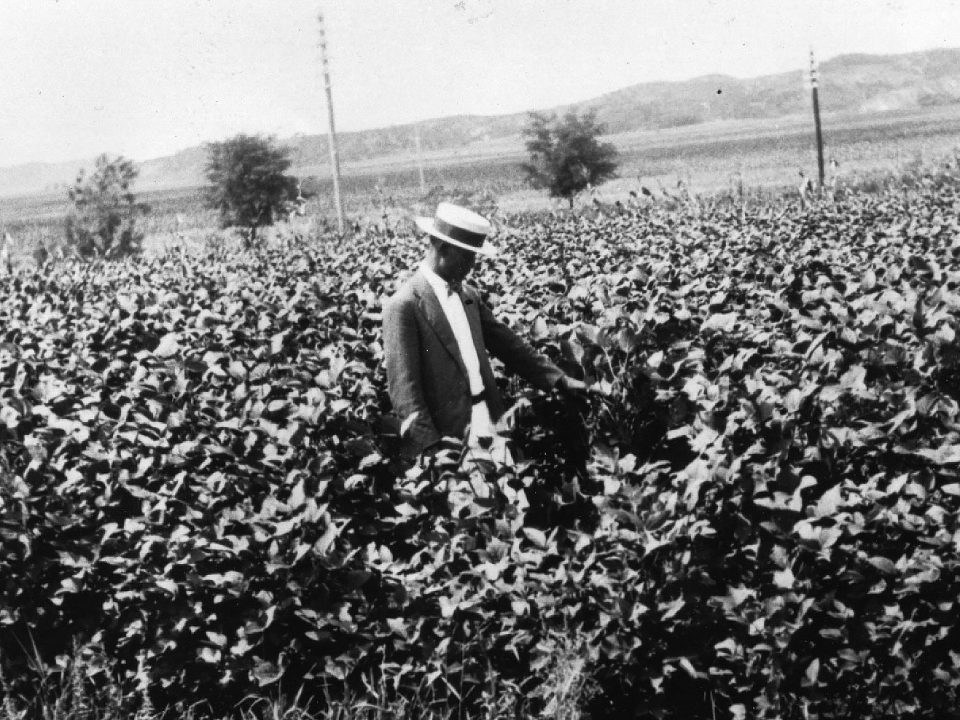 This photo shows an early soybean field. In the 10 years from 1919 to 1929, U.S. soybean production grew from 1.08 million bushels to 9.44 million bushels, soon leading to the opportunity to start exporting U.S. soybeans.